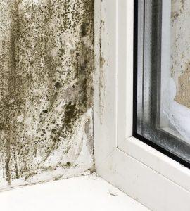humidite traitement hydrofuge isolation des murs